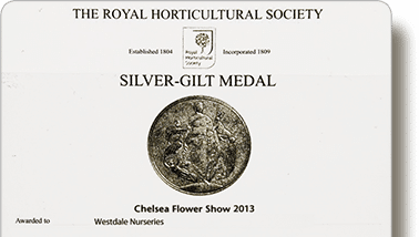 Bougainvillea Flowers Online 2013