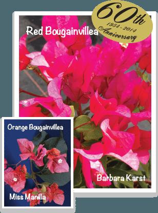 Bougainvilliea's